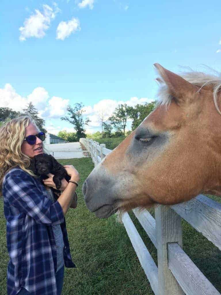 boykin puppy, woman and horse