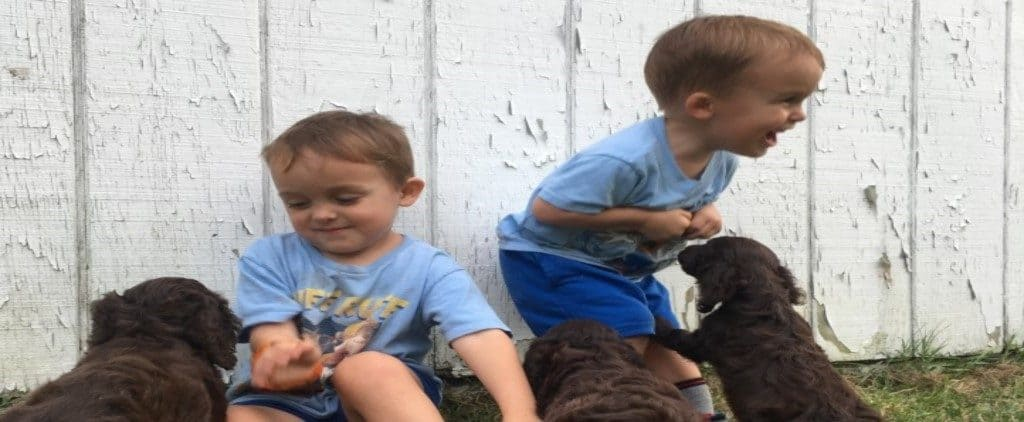 grankids and puppies