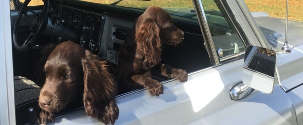 two puppies in truck window